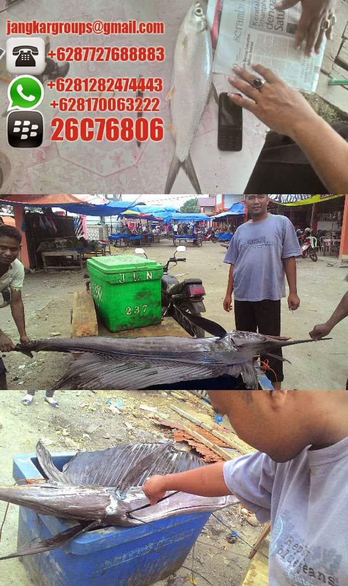 Pabrik Minyak Hati Ikan Hiu Botol Squalene Jangkar Global Groups Kaos Fish Shark Apabila Anda Memerlukan Bantuan Biro Jasa Untuk Mengurus