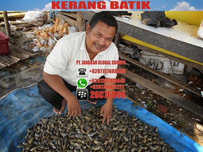 kerang batik