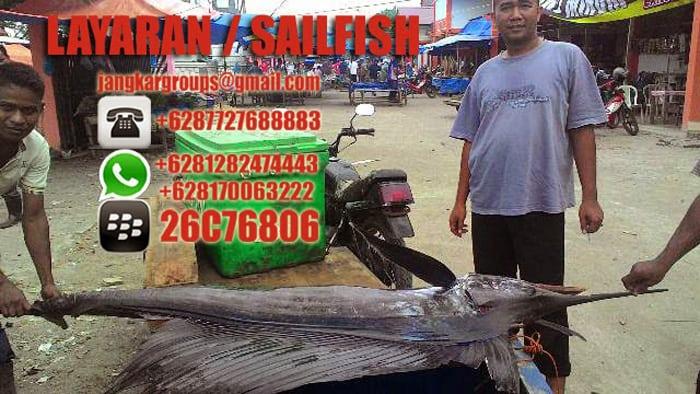 jual beli ikan