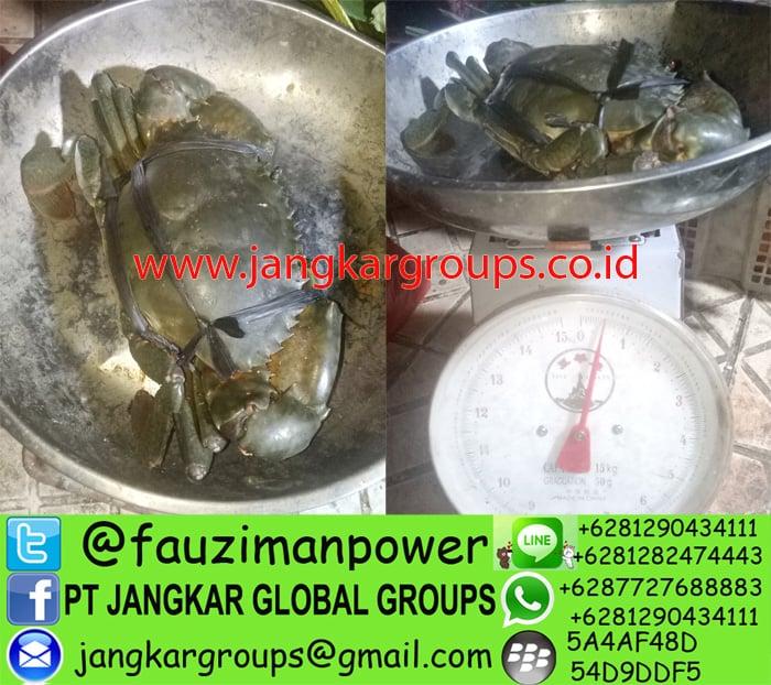 distributor kepiting