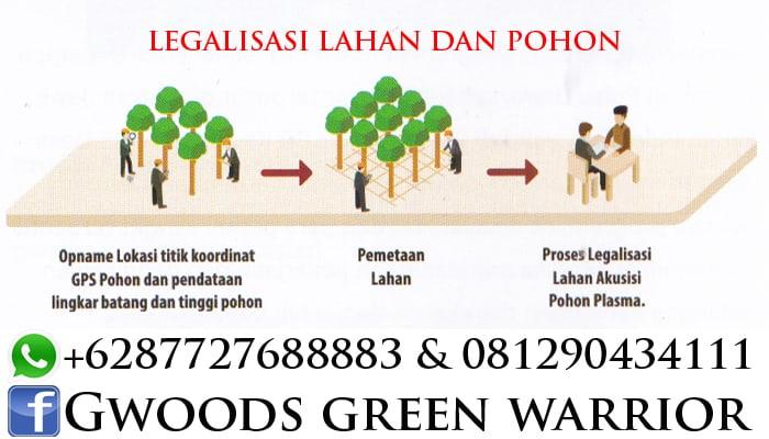 Legalisasi lahan dan pohon jabon