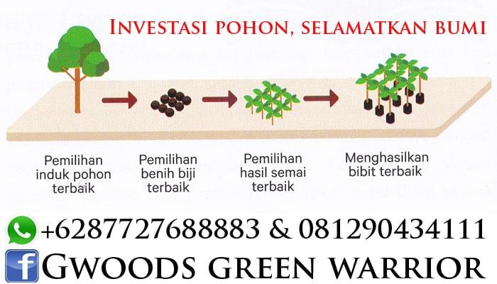 bisnis investasi pohon jabon