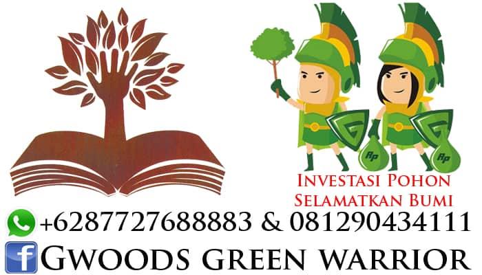 investasi pohon jabon