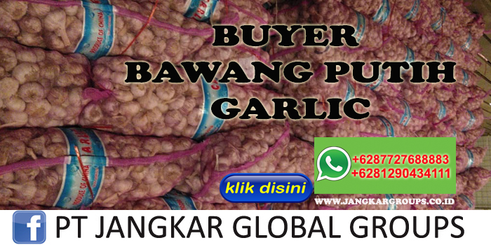 Buyer Bawang Putih Garlic