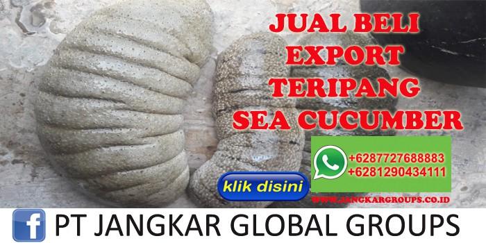 JUAL BELI EXPORT TERIPANG SEA CUCUMBER