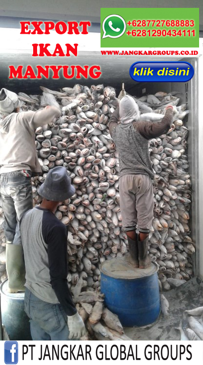 export ikan manyung