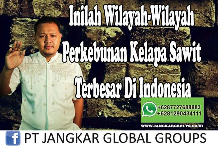 Inilah Wilayah-Wilayah Perkebunan Kelapa Sawit Terbesar Di Indonesia Mohan Se