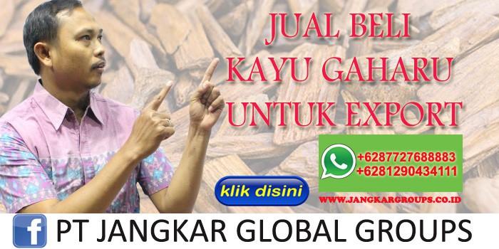 JUAL BELI KAYU GAHARU UNTUK EXPORT
